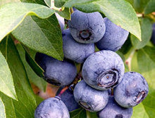 7 Superfoods you should be eating!